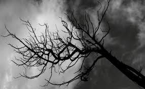 tim burton s tree stock image image of several morell 59022625