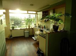 plante pour cuisine quelle plante mettre dans une cuisine