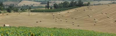 chambre agriculture tarn et garonne les aides à l installation et à la transmission d exploitation