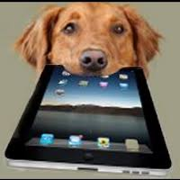 Are All Dogs Colour Blind Best In Show Of Dog Myths U2014 Modern Dog Daycare Pet Boarding And