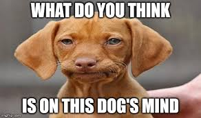 What Do You Think Meme - dog s expression 1 meme imgflip