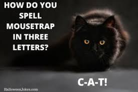 Joke Memes - halloween black cat meme jokes halloween memes