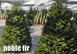 where to buy fresh cut christmas trees in kansas city