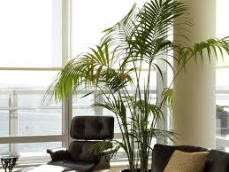 Modern Indoor Planters Plant Stand Window Table For Plants Best Planters Ideas On