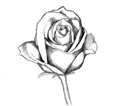 lily n rose tattoo sketch photos pictures and sketches