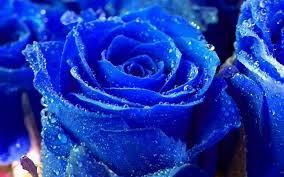 beautiful plants flowers beautiful plants nature spring blue delicate flower