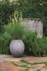 grasses as container plants gallery garden design