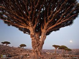 socotra photo gallery pictures more from national geographic
