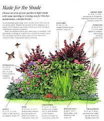 Shady Garden Ideas Ideas For An Easy Care Shady Border Pinteres