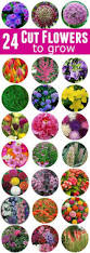 garden of eden flower shop best 25 cut flower garden ideas on pinterest flowers garden