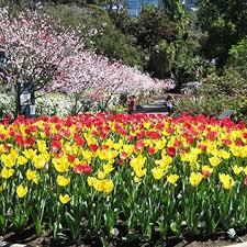 The Australian Botanic Garden Australian Botanic Garden About Us