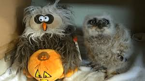 halloween songs youtube monster mash this baby owl dancing to