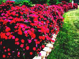 affordable garden design garden design ideas