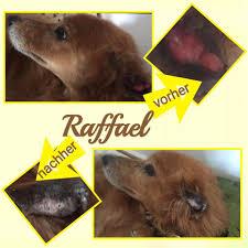 Tierheim Bad Segeberg Gnadenhund Raffael U2013 Jake Hundehilfe