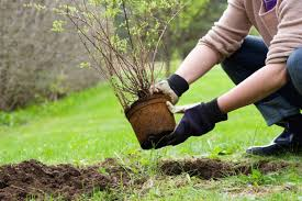 late winter gardening tips or is it early spring heart of