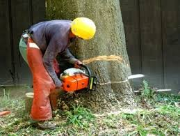 best tree service tree removal experts