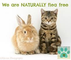no more ferret fleas natural flea control treatment for ferrets