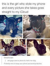 French Bulldog Meme - that fabulous thief the meta picture