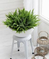 Low Light Indoor Trees Best 25 Low Maintenance Indoor Plants Ideas Only On Pinterest