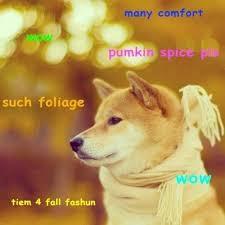 Best Of Doge Meme - amazing 118 best doge images on pinterest wallpaper site
