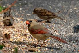 urban wildlife guide polar vortex winter birds