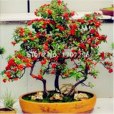 high quality ornamental trees landscaping promotion shop for high