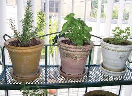 indoor garden wall an indoor herb garden wall garden pinterest