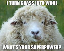 Alpaca Sheep Meme - image tagged in sheep imgflip