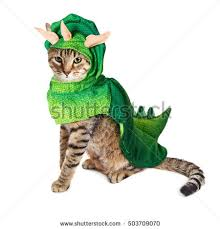 Halloween Costumes Cats Wear Pet Costume Stock Images Royalty Free Images U0026 Vectors Shutterstock