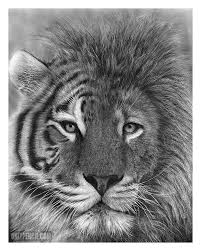 onlypencil com wildlife pencil drawings by lisandro peña