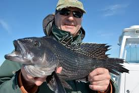 cape cod black sea bass fishing charters with reel deal fishing