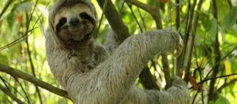 Sloth Meme Pictures - sloth meme shimul93blog