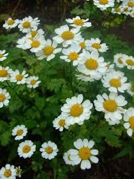 wedding flowers hull 74 best january flowers in season images on flowers