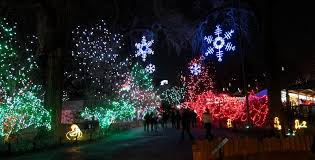 denver zoo lights hours zoo lights at the denver zoo beautiful and a fun way to spend a few