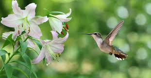 create a garden that attracts birds to your garden this spring