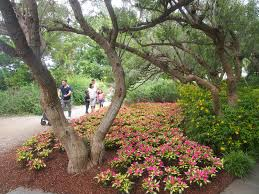 the dallas arboretum and botanical garden been there seen that
