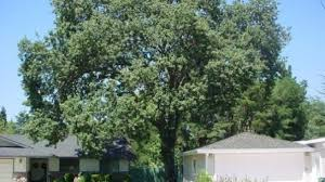 contra costa county tree service certified