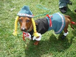 Halloween Costumes Miniature Dachshunds 411 Doxies Costume Images Dachshunds