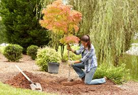 garden design garden design with planting and transplanting trees