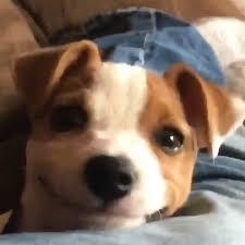 Smiling Dog Meme - me irl on twitter me irl