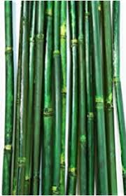 Decorative Bamboo Sticks Amazon Com Greenfloralcrafts Decorative Bamboo Poles 3 5 Ft