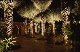 Mckay Landscape Lighting by Uplighting Landscape Signature Palms The Light Pinterest