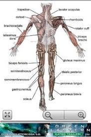 Google Body Anatomy Human Anatomy Android Apps On Google Play