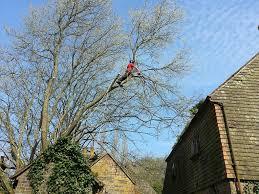 tree surgery johns tree services