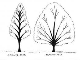 51 best trees for shade and images on outdoor