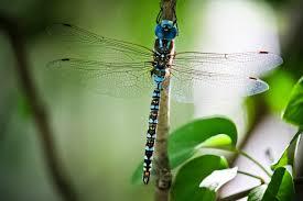 dragonflies butterflies u0026 mythology