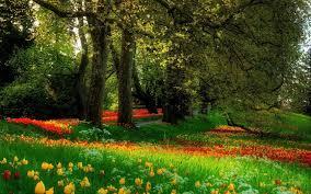 beautiful flower scenery flowers garden park beautiful sc