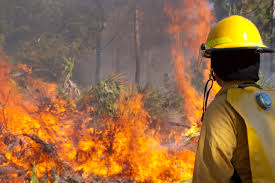 Wild Fires In Canada Now by Ucr Today Uc Riverside Wildfire Experts