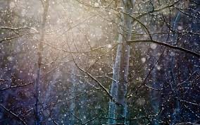 snowing the trees wallpaper nature wallpapers 26619