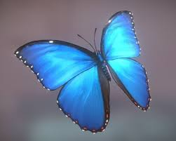 butterfly 3d animation 3d model butterfly cgtrader ideas
